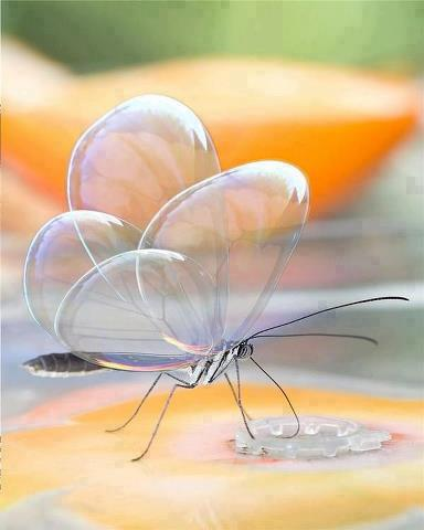 Transparent Animals bubble wing butterfly