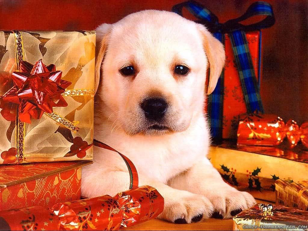 christmas puppy wallpaper - photo #32