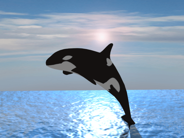 HD killer whale pictures