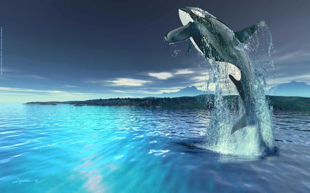 killer whale HD Wallpaper