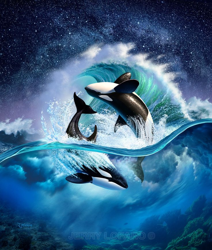 killer whale pictures wallpapers